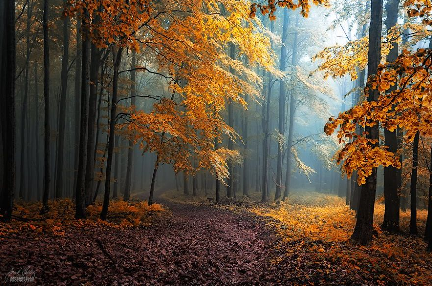 Картинки сказочных осенних листьев