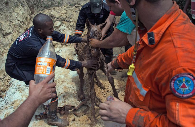 Техногенная катастрофа: токсичная грязь в Бразилии