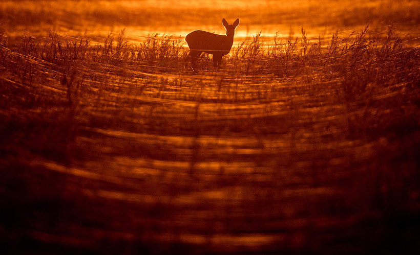 20 снимков животных, от которых невозможно оторвать взгляд