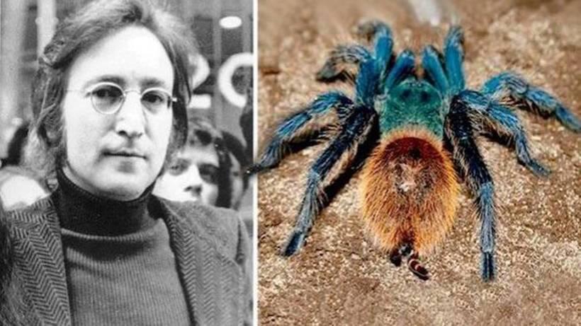 10 видов животных, открытых за последнее время