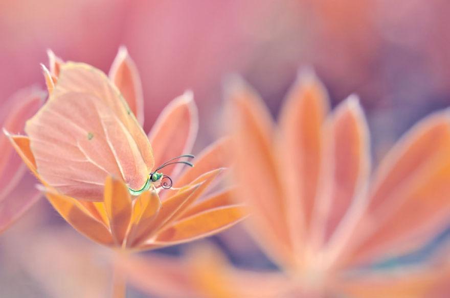 Картинки со сказочной природой бабочками