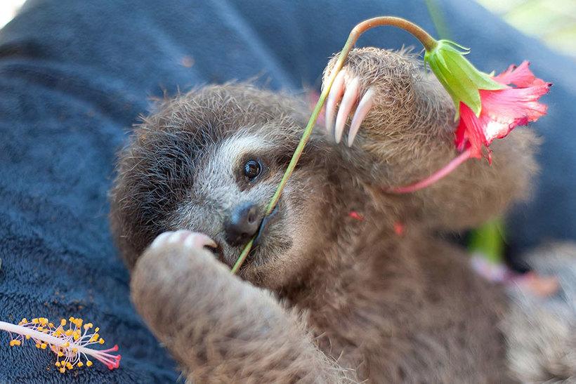 Удивительный Институт ленивцев в Коста-Рике. Бывает же такое!