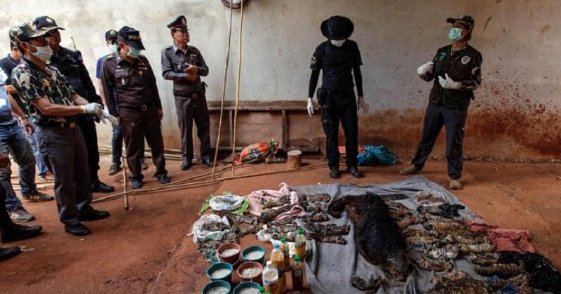 Скандал в Таиланде: жуткая находка в морозилках буддийского монастыря