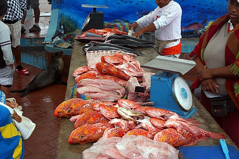 Red.fish_.galapagos.fish_.market.jpg?1486491950