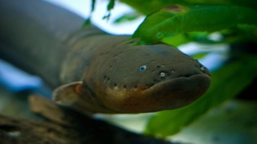 10 самых ужасающих существ Амазонки, наткнувшись на которых пожалеешь, что приехал