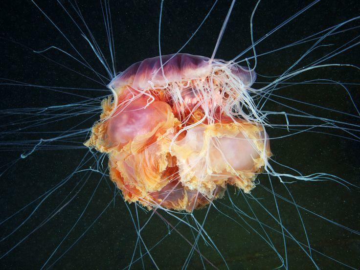 16 удивительных фото российского биолога, раскрывающих тайны морских глубин