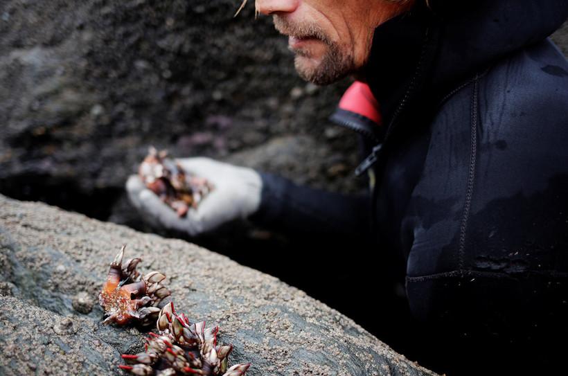 Ежедневно испанские смельчаки рискуют разбиться о скалы ради добычи редких моллюсков