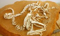 Динозавры, которых прозвали «цыплятами из ада», оказались прекрасными родителями