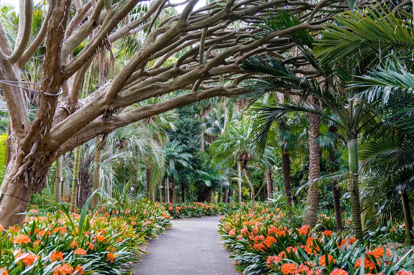 Где находятся 10 лучших ботанических садов мира