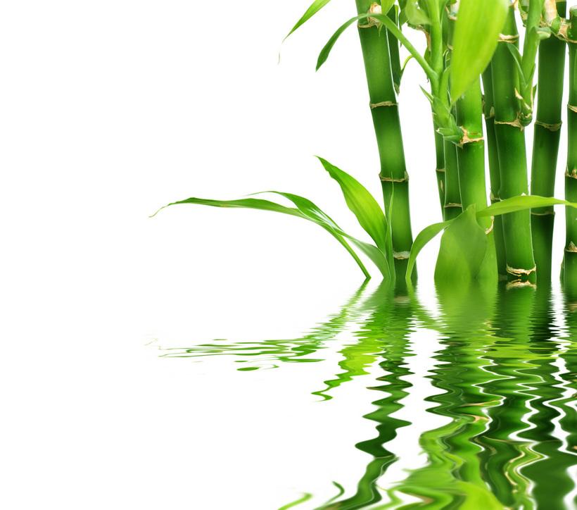 Bambuk-v-mifah-i-legendah-raznyh-narodov1.jpg?1529393683