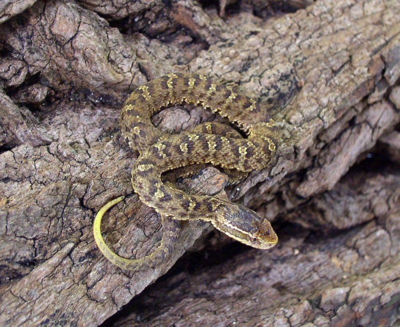 Их нужно знать в лицо: самые опасные змеи России
