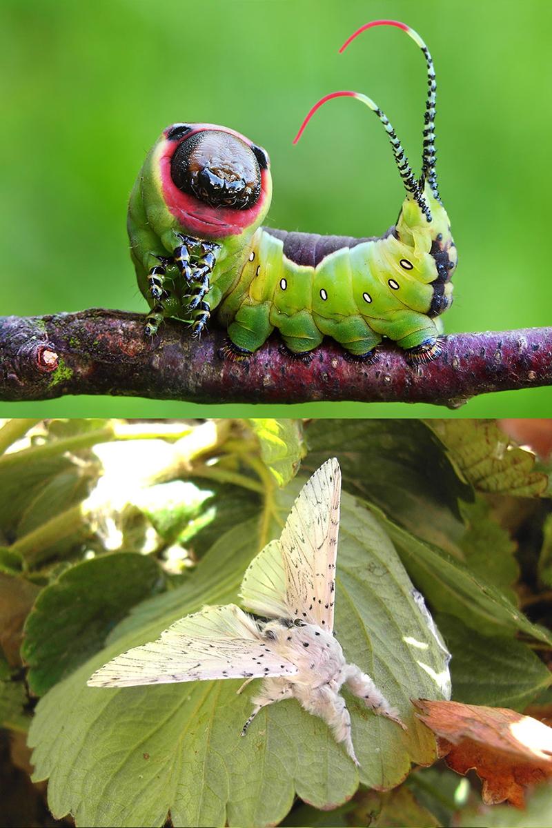Картинки по запросу Гусеницы и бабочки, в которые они преобразуются