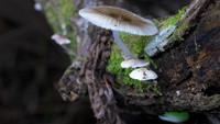 Шоу света от матери-природы: грибы, светящиеся в темноте