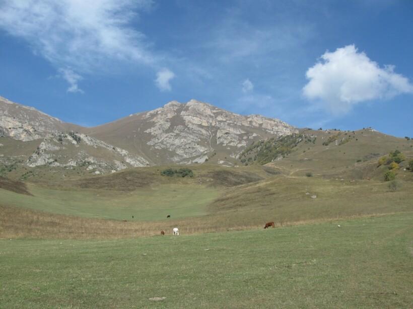 Альпийские горные луга