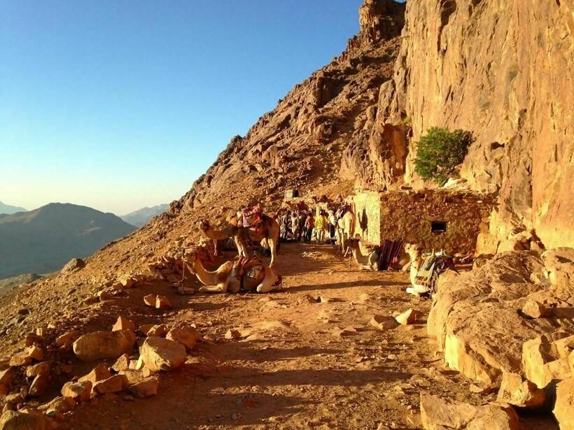 Бедуины и верблюды