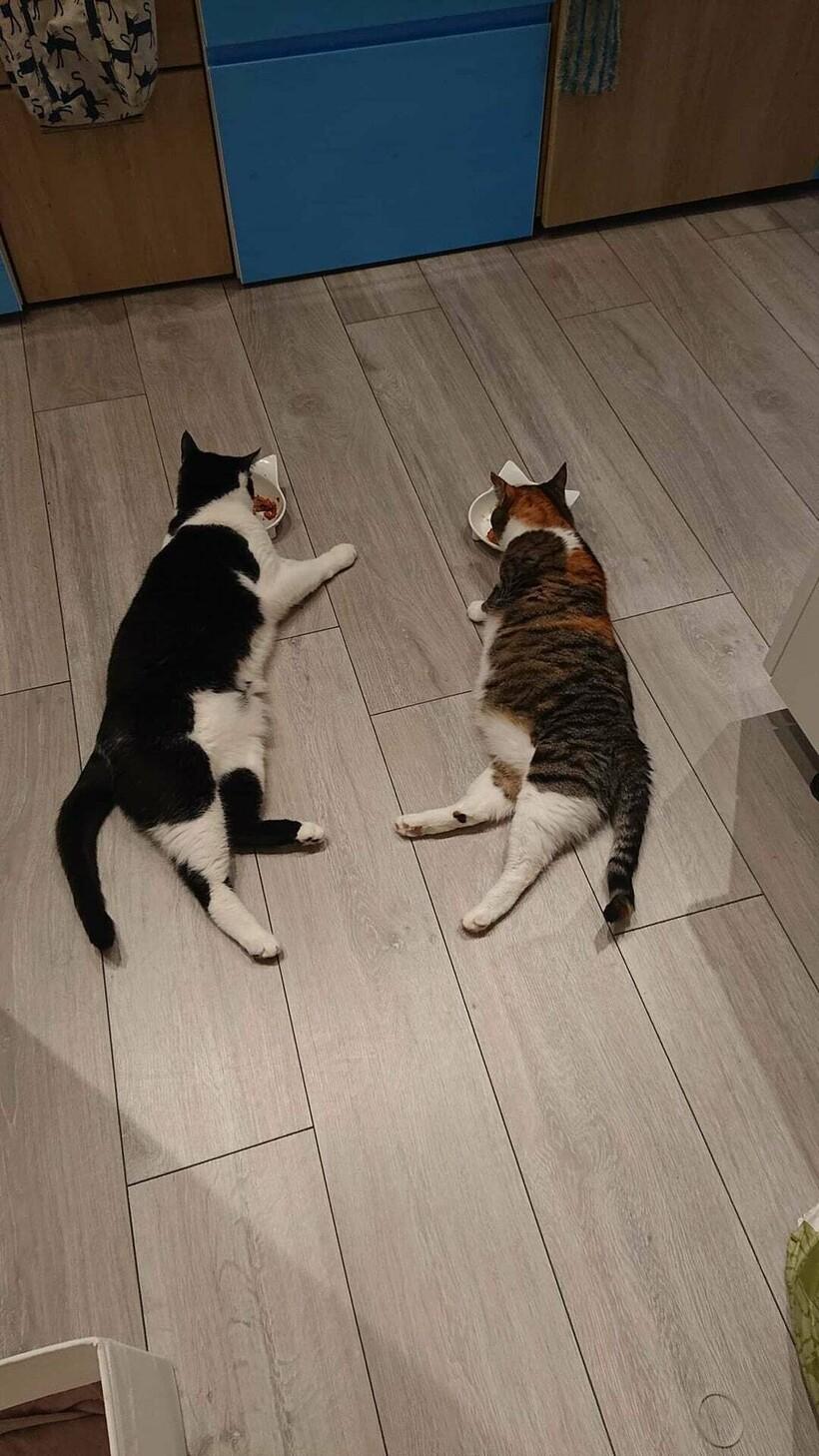 18 уморительных фото, которые доказывают, что 2 кошки лучше, чем одна