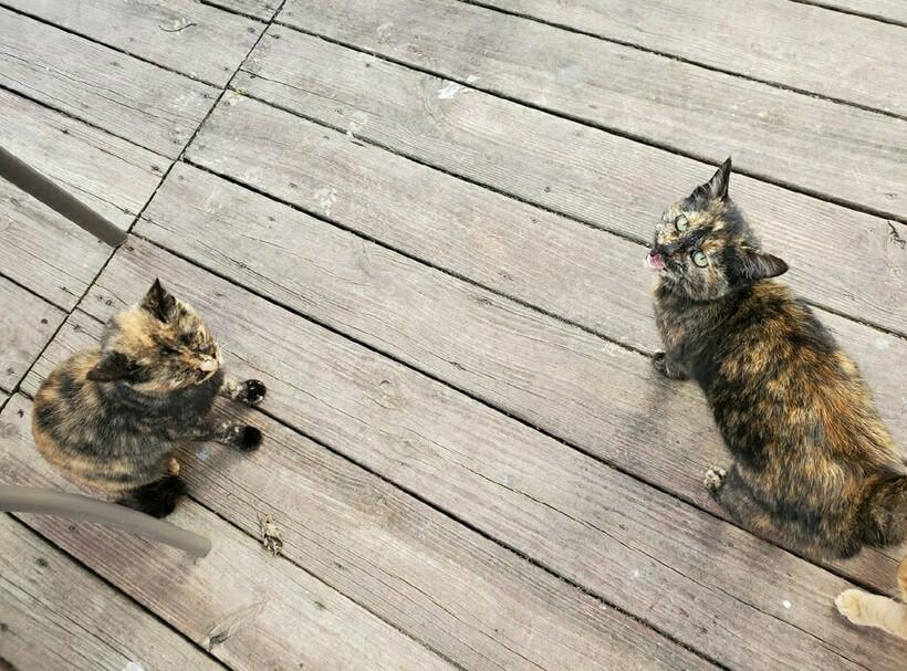 17 забавных фото котов, которые зашли в чужой дом и чувствуют себя хозяевами
